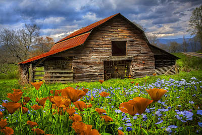 Barn In Tennessee Photograph - Country Poppies by Debra and Dave Vanderlaan