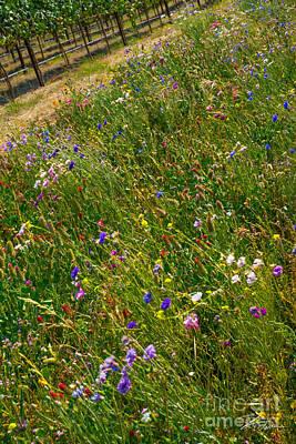 Rural Scenes Mixed Media - Country Wildflowers I   by Shari Warren