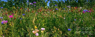 Rural Scenes Mixed Media - Country Wildflowers IIi by Shari Warren