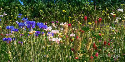 Rural Scenes Mixed Media - Country Wildflowers Iv by Shari Warren