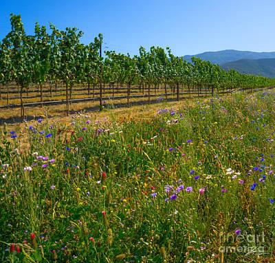 Rural Scenes Mixed Media - Country Wildflowers V by Shari Warren