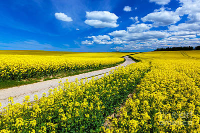 Ground Photograph - Countryside Spring Field Landscape With Yellow Flowers - Rape by Michal Bednarek