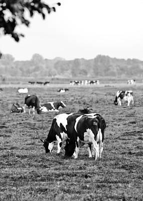 Feild Photograph - Cow 188 by Edward Myers