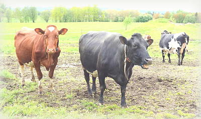 Cows Not Silly At All Original by Hilde Widerberg