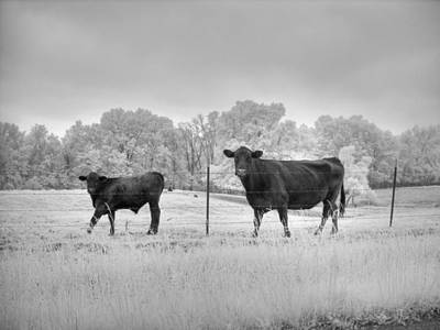 Rural Landscapes Photograph - Cow  by Jane Linders