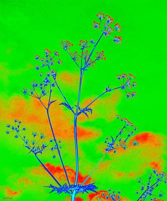Cow Parsley Blossom 4 Print by Martine Murphy