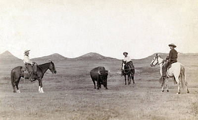 Cowboys, Roping A Buffalo Print by Everett