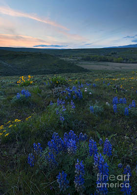 Cowiche Wildflower Sunset Print by Mike Dawson