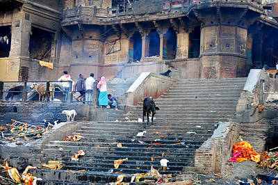 Cremation Ghat Photograph - Cows And Ghats by John And Laurel Rodgers
