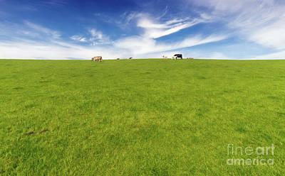 Calf Digital Art - Cows In A Pasture by Adrian Evans