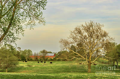 Cows In Field With Lone Tree In Field Print by Photo Captures by Jeffery