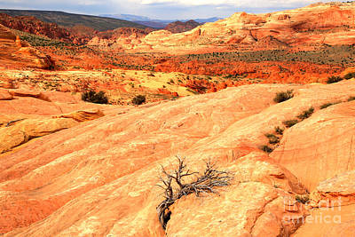 Coyote Buttes Rainbow Landscape Print by Adam Jewell
