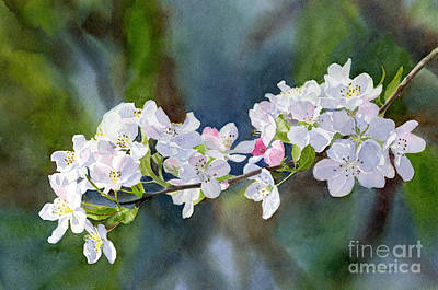 Blooming Painting - Crab Apple Blossoms With Background by Sharon Freeman