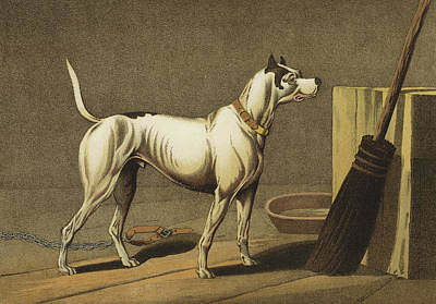 Hounds Drawing - Crab by Henry Thomas Alken