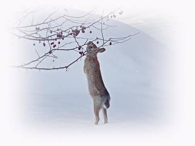 March Hare Photograph - Crabapple Bunny by MTBobbins Photography