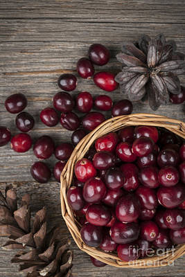 Cranberries In Basket Print by Elena Elisseeva
