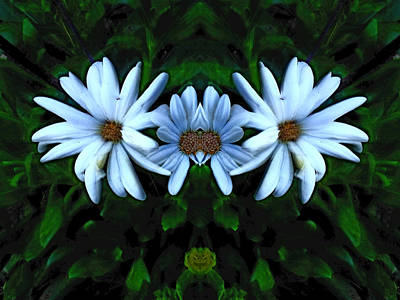 Daisy Photograph - Crazy Daisies In Green by Heather Joyce Morrill