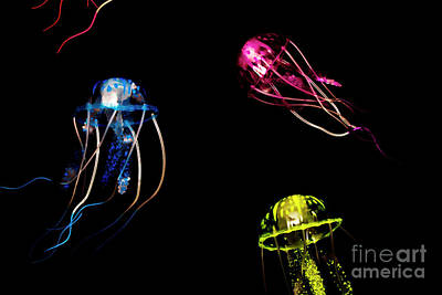 Invertebrates Photograph - Creatures Of The Deep by Jorgo Photography - Wall Art Gallery