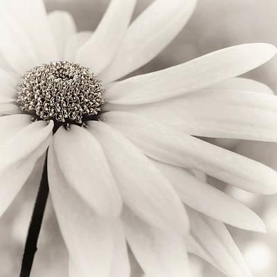 Photograph - Creme Fraiche In Black And White by Darlene Kwiatkowski
