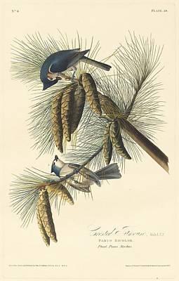 Titmouse Drawing - Crested Titmouse by John James Audubon
