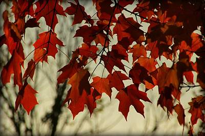 Crimson Red Autumn Leaves Print by Chris Berry