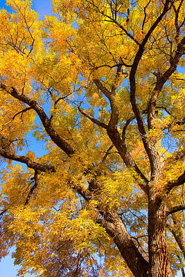 James Insogna Photograph - Crisp Autumn Day by James BO  Insogna