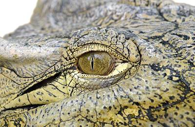 Portrait Photograph - Crocodile Eye by George Atsametakis