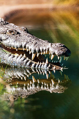 Crocodile With Sharp Teeth Print by Susan  Schmitz