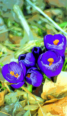 Crocus Image Print by Paul Price