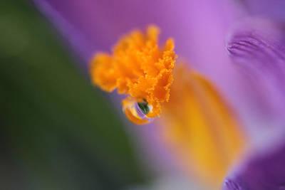 Chromatic Photograph - Saffron's Raindrop Marble by Connie Handscomb