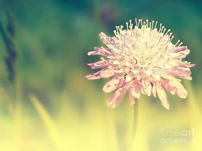 Macro Mixed Media - Pincushion Flower by Angela Doelling AD DESIGN Photo and PhotoArt