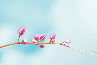 Floral Photograph - Cross The Life  by Nam Tran