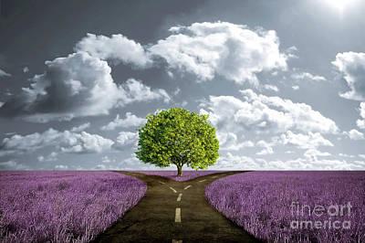 Crossroad In Lavender Meadow Original by Giordano Aita