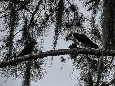 Osprey Photograph - Crow And Osprey by Zina Stromberg