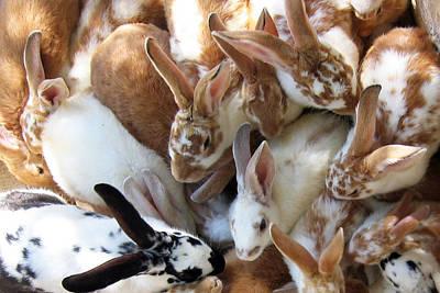 Rabbit Photograph - Crowd Of Rabbits by Svetlana Sewell
