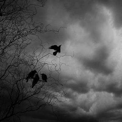 Bare Trees Digital Art - Crows by Cambion Art