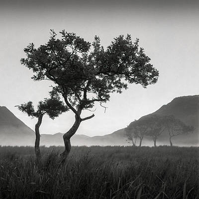 Crummock Water Tree Print by Dave Bowman