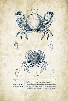 Crustaceans - 1825 - 02 Print by Aged Pixel