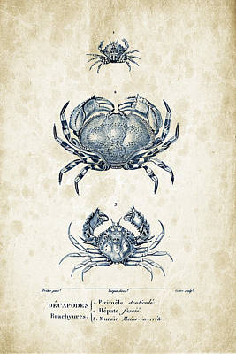 Crustaceans - 1825 - 07 Print by Aged Pixel