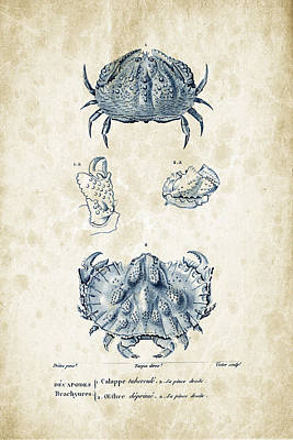 Crustaceans - 1825 - 08 Print by Aged Pixel