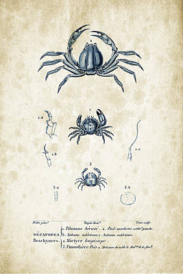 Crustaceans - 1825 - 09 Print by Aged Pixel