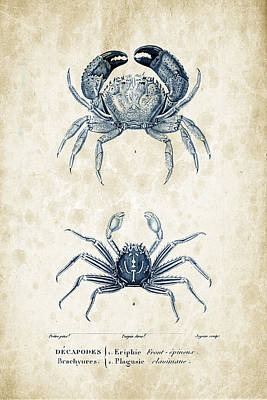 Crustaceans - 1825 - 12 Print by Aged Pixel