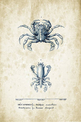 Crustaceans - 1825 - 17 Print by Aged Pixel