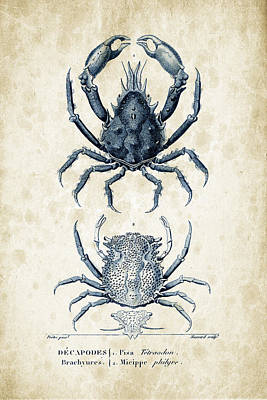 Crustaceans - 1825 - 20 Print by Aged Pixel