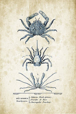 Crustaceans - 1825 - 21 Print by Aged Pixel