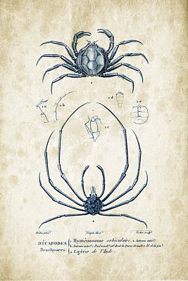Crustaceans - 1825 - 24 Print by Aged Pixel
