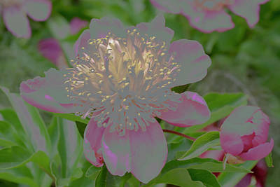 Spacious New Home Digital Art - Crystalline Flower by Don Wright