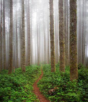 Cummins Wilderness Trail Print by Leland D Howard