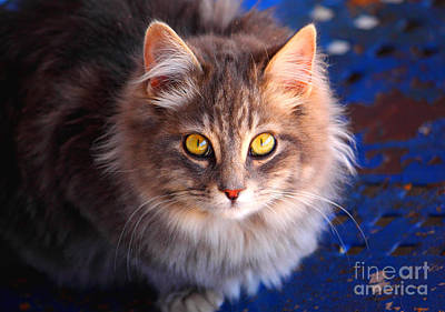 Kitty Photograph - Curiosity 2 by Andrew Glisson