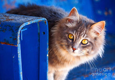 Cats Photograph - Curiosity by Andrew Glisson